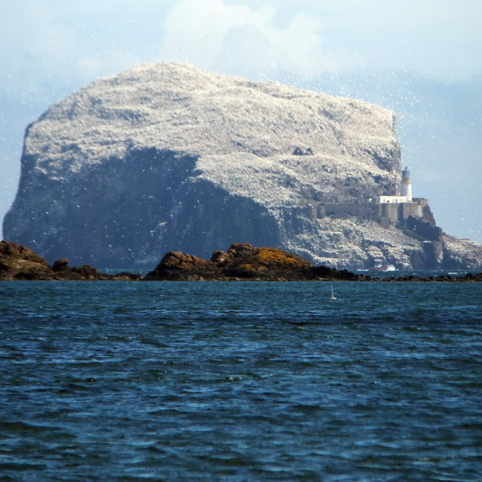 The Bass Rock is a large rock at the mouth of the Firth of Forth, with the remains of an old castle of the Lauders, later used as a prison and now home to many seabirds, near North Berwick in East Lothian in southeast Scotland.