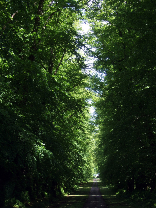 Lime avenue in the grounds of Mount Stuart House, probably the most sumptuous mansion in Scotland with a spectacular interior including the magnificent Marble Hall and Chapel, built by the Crichton-Stuart Marquess of Bute and in lovely landscaped gardens