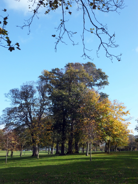 Trees in the park of The Lodge, North Berwick, an attractive grouping of whitewashed buildings in expansive gardens and public parkland, long held by the Dalrymples and in the popular seaside town of North Berwick in East Lothian in southeast Scotland.