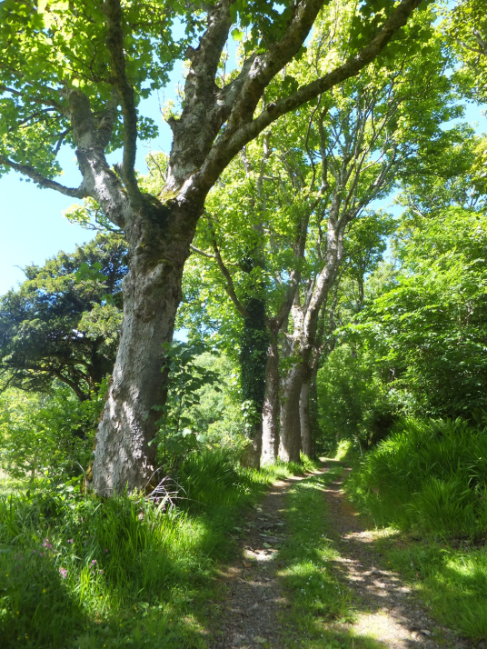 Woodland walk, Ardmaddy Castle and Gardens, an attractive mansion on a rock in a beautiful spot with the fantastic walled garden, water garden and wooded grounds, near Oban in Argyll.